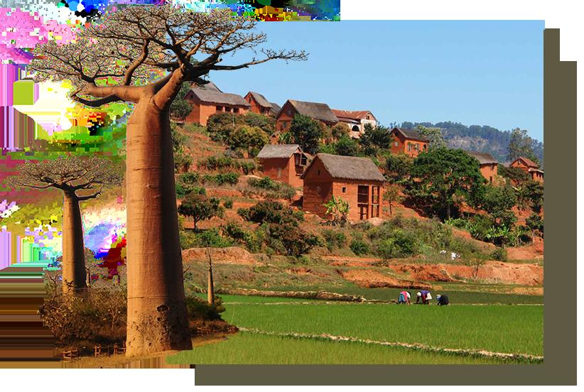 Baobab et paysage haut plateaux