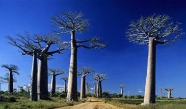 Enduro Moto – « Baobab Tour »